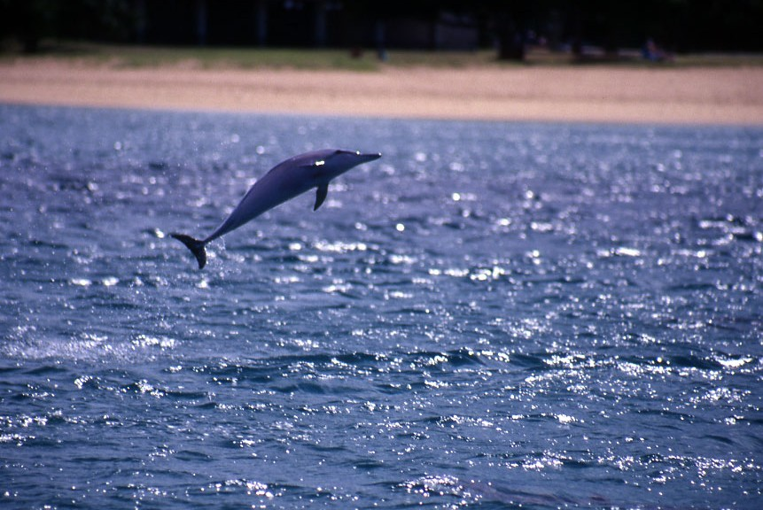 dolphinjump01